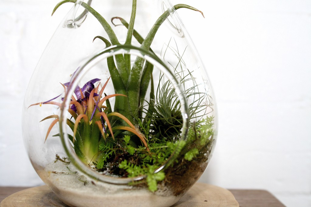 Prickly plant life growing indoors in an open goldfish bowl