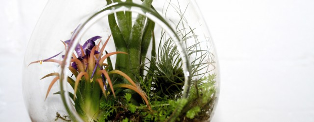 Prickly plant life growing indoors in a goldfish bowl